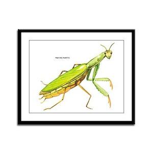 Praying Mantis Insect Framed Panel Print