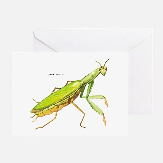 Praying Mantis Insect Greeting Card