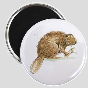 Beaver Animal Magnet
