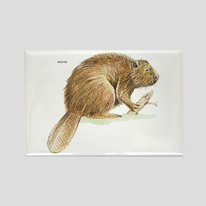 Beaver Animal Rectangle Magnet