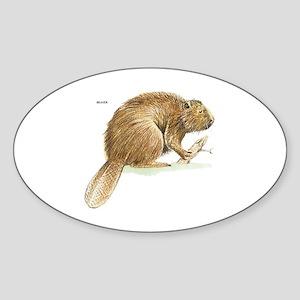 Beaver Animal Sticker (Oval)
