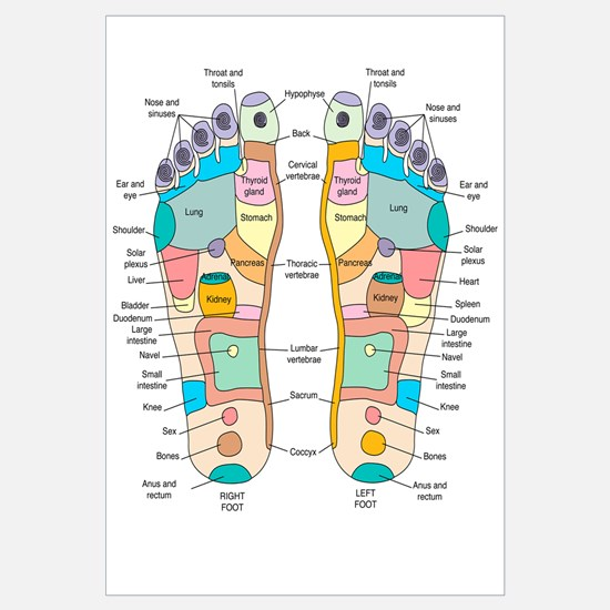 Reflexology foot map, artwork
