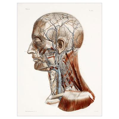 Head And Neck Anatomy Historical Artwork Canvas Art