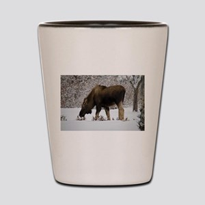 Hungry Moose Shot Glass