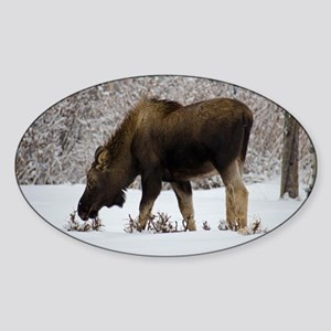 Hungry Moose Sticker