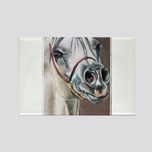 Arabian Stallion Rectangle Magnet