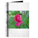 Beautiful Rose Photo Journal