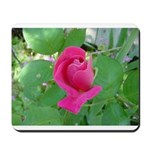 Beautiful Rose Photo Mousepad
