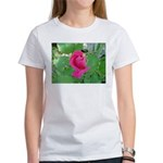 Beautiful Rose Photo Women's T-Shirt