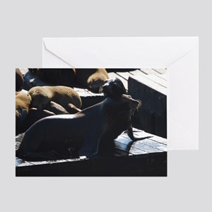 Sea Lion Love Greeting Card