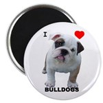 Bulldog Magnet (10 pack) I Love Bulldogs