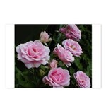Think Pink Roses Postcards (Package of 8)