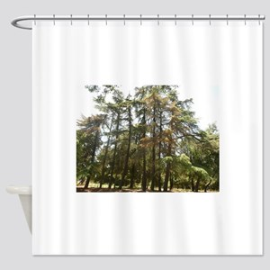 thousand Oaks Park pine trees grove Shower Curtain