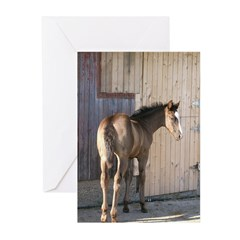 DAKOTA Greeting Cards (Pk of 10)