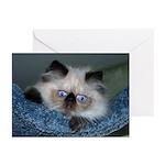 Blue-Eyed Himalayan Kitten Greeting Cards