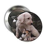Dogo puppy 2.25