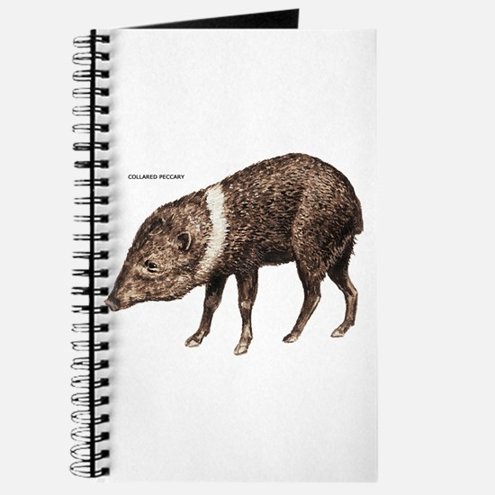 Collared Peccary Animal Journal