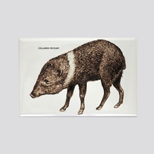 Collared Peccary Animal Rectangle Magnet