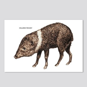 Collared Peccary Animal Postcards (Package of 8)