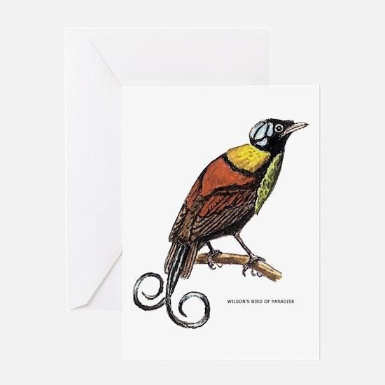 Wilson's Bird of Paradise Greeting Card
