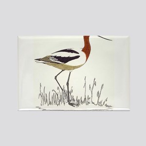 Avocet Rectangle Magnet