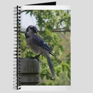 Smiling Blue Jay Journal