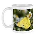 Cloudless Sulfur Butterfly Mug