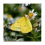 Cloudless Sulfur Butterfly Tile Coaster