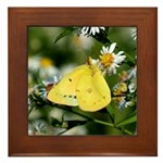 Cloudless Sulfur Butterfly Framed Tile