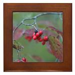 Dogwood Berries Framed Tile