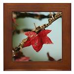 Gum Tree LeafFramed Tile