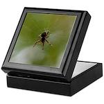 Spider on Web Keepsake Box