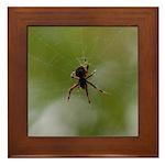 Spider on Web Framed Tile