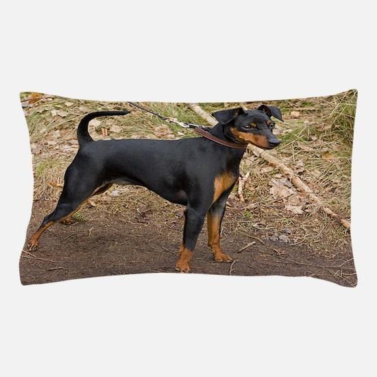 miniature pinscher black and tan full Pillow Case