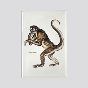 Spider Monkey Rectangle Magnet