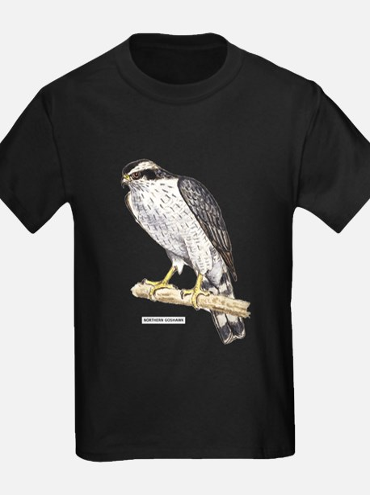 Northern Goshawk Bird T