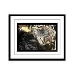 Im Just a Stray - Photograph Framed Panel Print