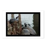 Turtle Time - Digital Photography Postcards (Packa