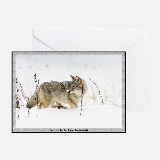 Coyote Note Cards (snz) (Pk of 10)