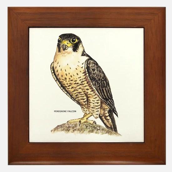 Peregrine Falcon Bird Framed Tile