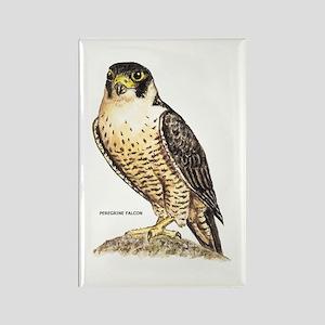 Peregrine Falcon Bird Rectangle Magnet