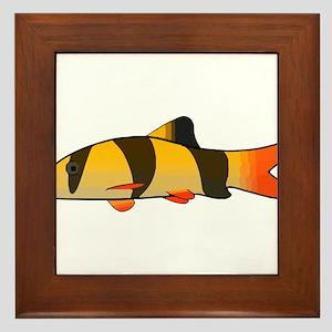 Clown Loach Framed Tile