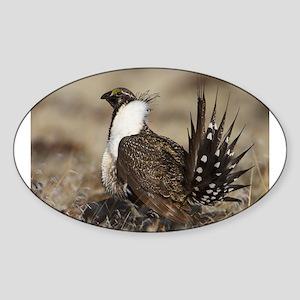 Sage Grouse Strut Sticker