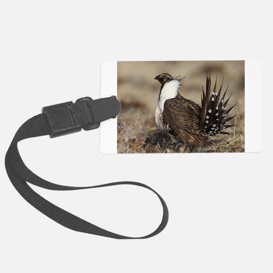 Sage Grouse Strut Luggage Tag