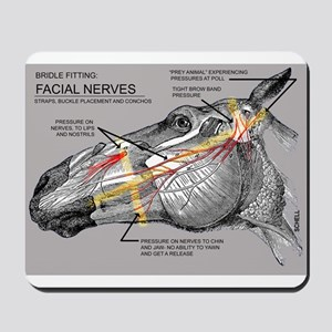 Facial Nerves and the importance of bridle fit Mou