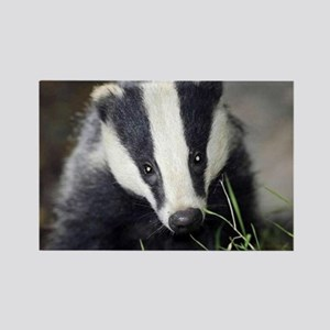 Badger Rectangle Magnet