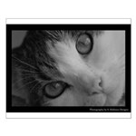 Leila Kitty in Black White Posters