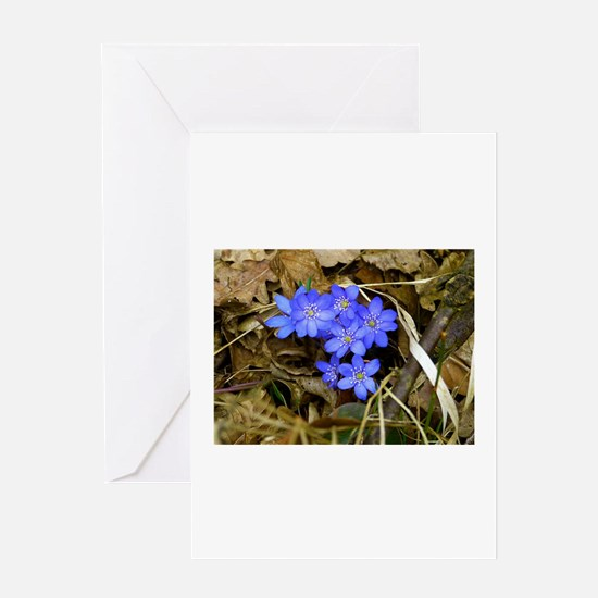 Hepatica Flower Greeting Card