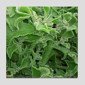 Ice plants (beautiful plant world) Tile Coaster