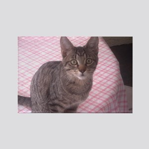 Beautiful Tabby Rectangle Magnet